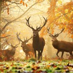 El Parque Real de Richmond Park en Londres